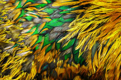 Bright brown feather group Stock Photography