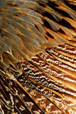 Bright brown feather group of some bird Stock Images