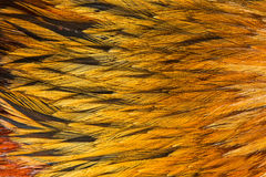 Bright brown feather group of some bird. Close up Stock Images