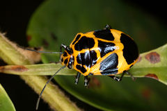 Bright bug on a leaf Stock Image