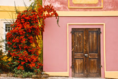 Bright bush on the wall. Stock Photos