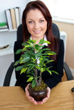 Bright businesswoman presenting a plant Stock Photography