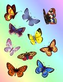 Bright Butterflies Royalty Free Stock Photography