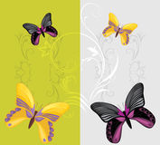 Bright butterflies on the decorative background Stock Images
