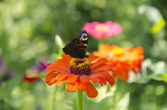 Bright butterfly on a flower Stock Image