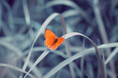 Bright  butterfly Royalty Free Stock Photography
