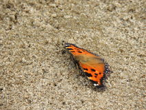 Bright butterfly in the sand Stock Photo