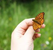 Butterfly sitting on hand on summer nature backround. Bright butterfly sitting on hand on summer nature backround royalty free stock image