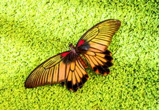 Bright butterfly Stock Image