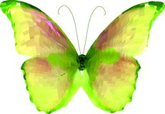 Bright butterfly. Vector Stock Photos