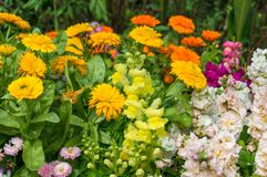 Colourful flowerbed on sunny day Stock Photos