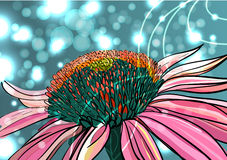 Bright camomile. VEctor background with drawing pink camomile Royalty Free Stock Photo