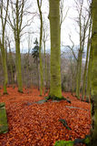 Bright carpet of leaves in hardwood forest Karlovy Vary Royalty Free Stock Photos