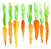 Bright carrot. Watercolor. Isolated on white background Stock Photography
