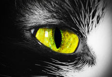 Bright cat's eye close-up, abstract background vision Stock Photos