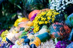 Bright, Celebration, Colors stock image