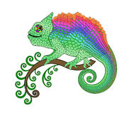 Bright Chameleon on a branch with green curls Stock Image