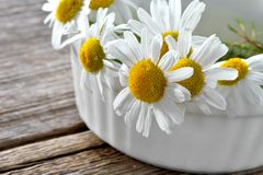 Bright chamomile flowers in white ceramic ware close-up Stock Photos