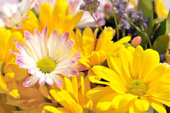 Bright cheerful spring flowers royalty free stock photo