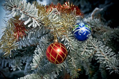 Bright Christmas bauble from a snow covered Royalty Free Stock Photography