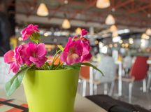 Bright photo fake flowers close up in train station background royalty free stock photos