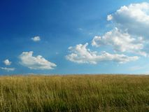 Bright Cloudy sky and farm field. Golden farm field and beautiful blue sky with fluffy clouds Stock Photo