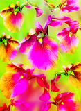 Bright color background with pink flowers Royalty Free Stock Photography