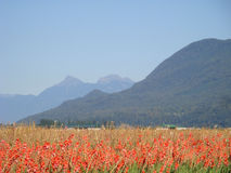Bright color crops contrast with mountian backdropRafting in British Columbia mountains Stock Photos