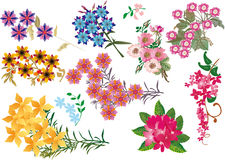 Bright color flowers collection Stock Image