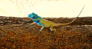 Bright color lizard (pangolin) on a tree. Against sand Stock Photos