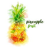 Bright color pineapple fruit and lettering on white background with watercolor stains. Vector illustration. Bright color pineapple fruit and lettering on white Royalty Free Stock Photos