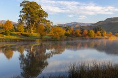 Bright colored autumn trees next to the water. South Africa royalty free stock images