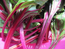 Bright Colored Beet Greens and Stems  Stock Photography