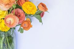 Bright Colored Bouquet of Ranunculus Flowers on White Background Royalty Free Stock Image