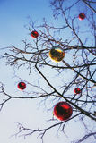 Bright colored Christmas decorations on a defoliated tree in Mos Stock Photo