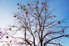 Bright colored Christmas decorations on a defoliated tree in Mos Royalty Free Stock Photography