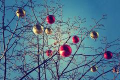 Bright colored Christmas decorations on a defoliated tree in Mos Royalty Free Stock Image