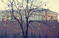 Bright colored Christmas decorations on a defoliated tree in Mos Royalty Free Stock Photos