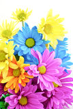 Bright Colored Daisies Stock Photo