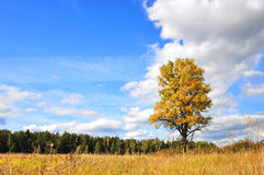 Bright colored fall tree with clear blue sky Stock Photos