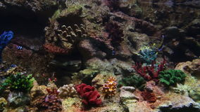 Bright colored fish in a coral reef stock footage