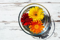Free Bright-colored Gerbera Daisies In Transparent Bowl With Water Royalty Free Stock Photo - 55296185