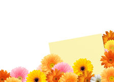 bright colored gerbera flowers and a sheet of paper Royalty Free Stock Photos