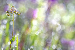 Bright colored grass in the dew in the morning sun Royalty Free Stock Image