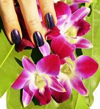 Bright colored photo of fingernails with manicure and orchids ma stock images