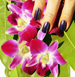 Bright colored photo of fingernails with manicure and orchids ma Stock Photos