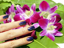 Bright colored photo of fingernails with manicure Stock Photography