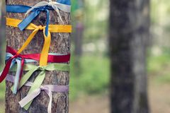 Bright colored ribbons tied around a tree. Religious Tradition of Buddhists.  stock photos