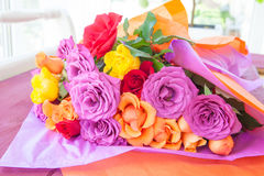 Bright colored roses Stock Image