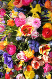 Bright colored spring flower bouquet Stock Photography